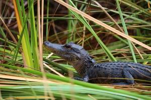 Everglades Holiday Park @ Everglades Holiday Park