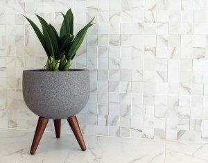 Japi lança vaso de plantas com pés