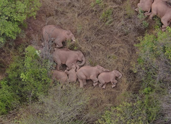 The elephants are asleep / Photo: Reuters, China Daily