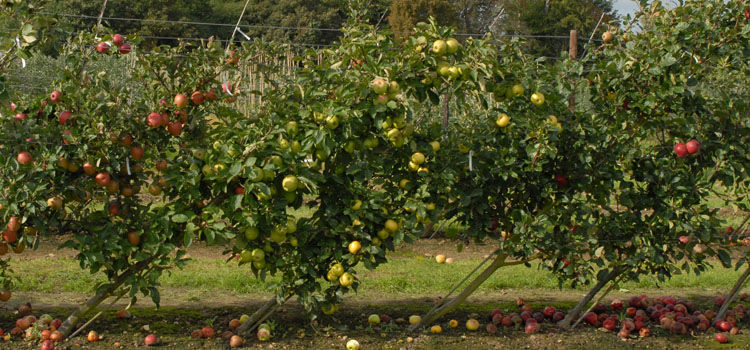 Best Garden Design Course Uk