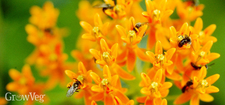 Best Perennial Flowers for Bees  Beetles and Butterflies