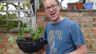 How to Grow Fruit and Vegetables in Hanging Baskets