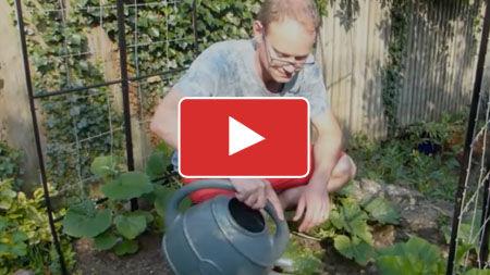 10 Smart Watering Tips for Your Vegetable Garden