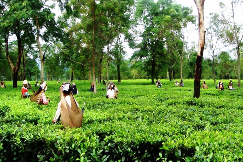 Assam Arunachal Tour Sightseeing 1