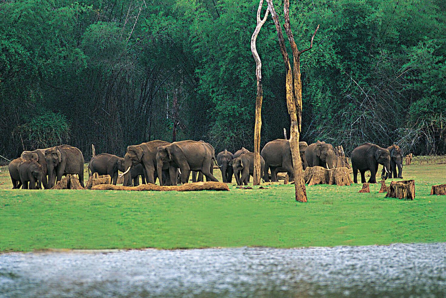 Kerala Tour Sightseeing 5