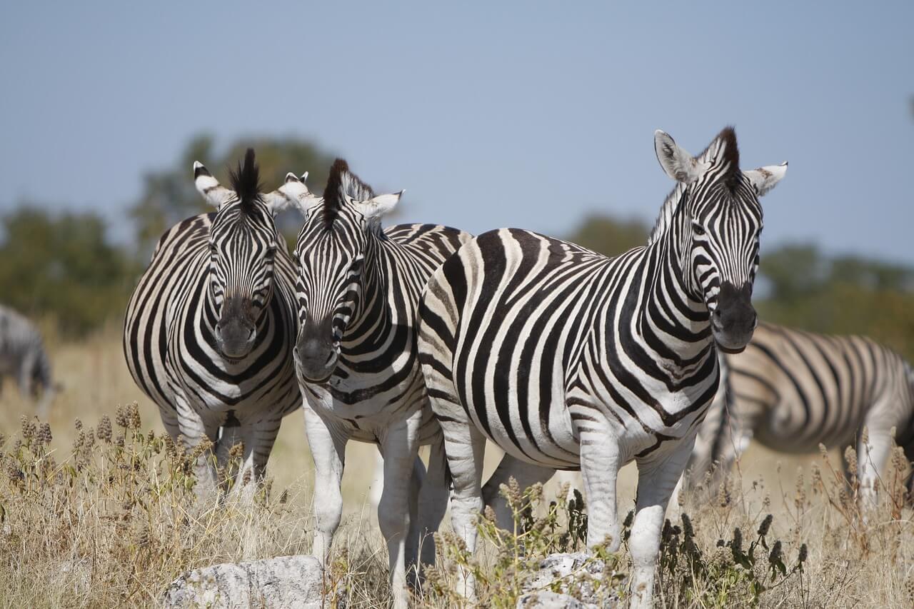 Namibia Tour Sightseeing 2