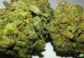 chem og marijuana strain is also called OG x Chemdawg