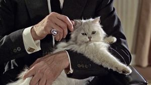 Persian cat in movie