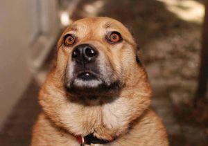 dog eyes scared