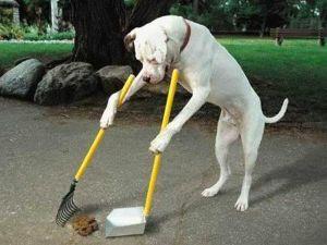 Sweeping own poop