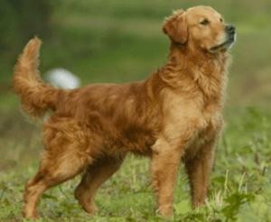 Dog ears alert