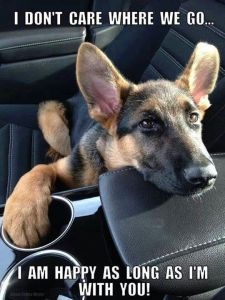 german shepherd cling