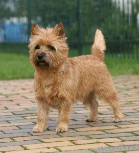 dog tail happy