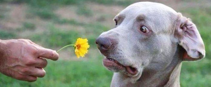 dog smell flower