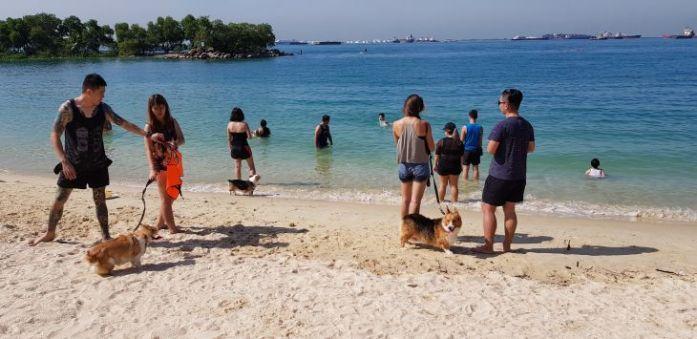 corgi swim 1
