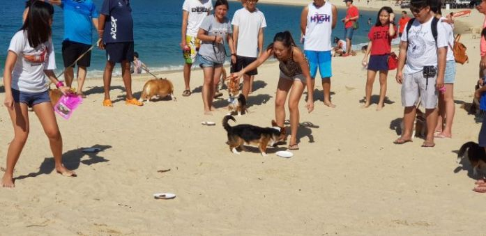 singapore corgi temptation trail 3