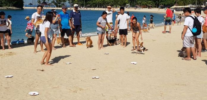 singapore corgi temptation trail 1