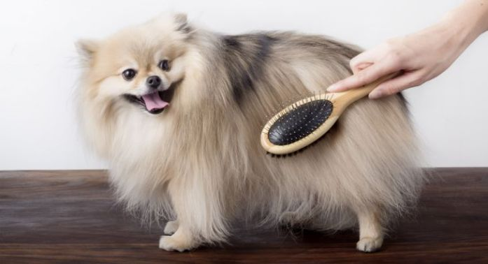 dog brushed