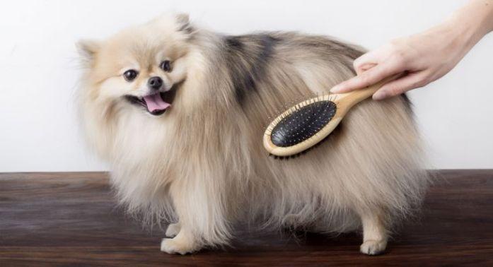 dog brushed