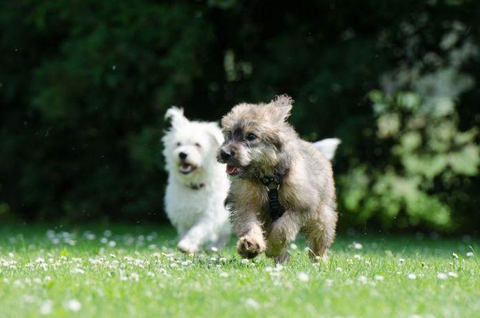 second dog race