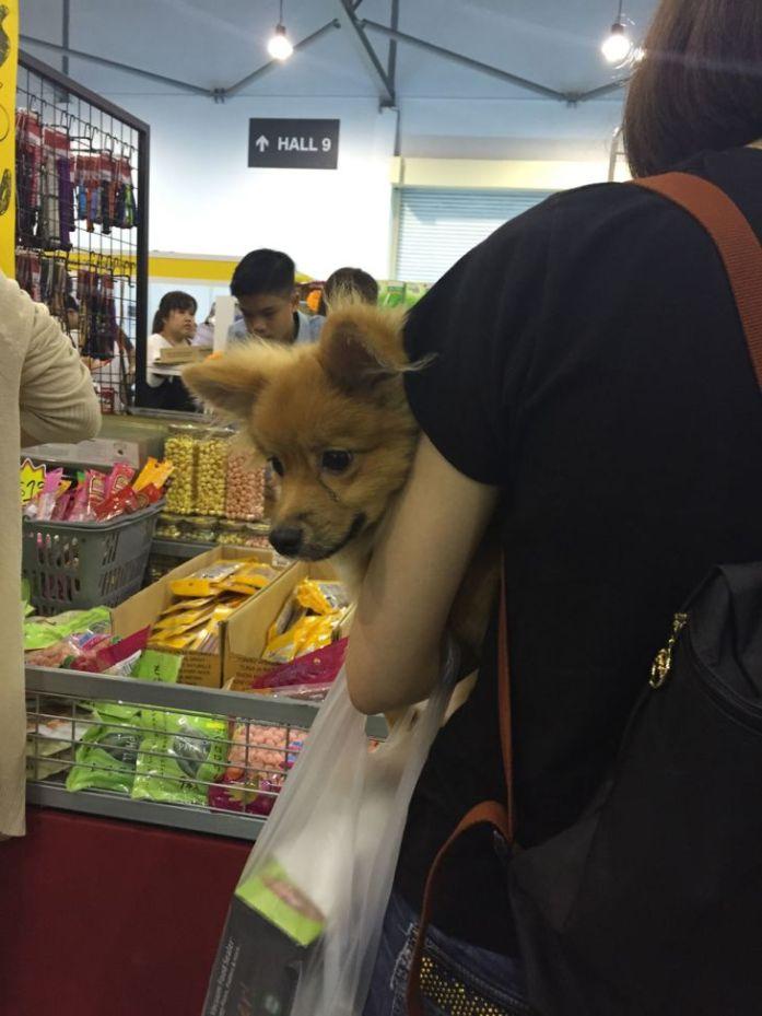 singapore-pet-expo-2015-372