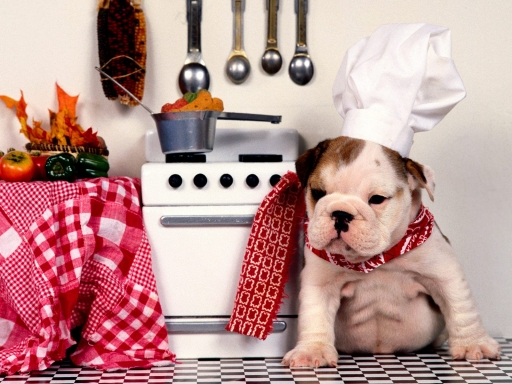 Chef-Dog-Cooking