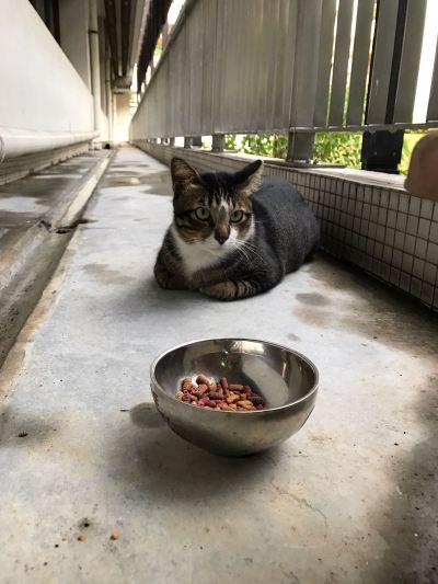 nus-cat-cafe-feeding