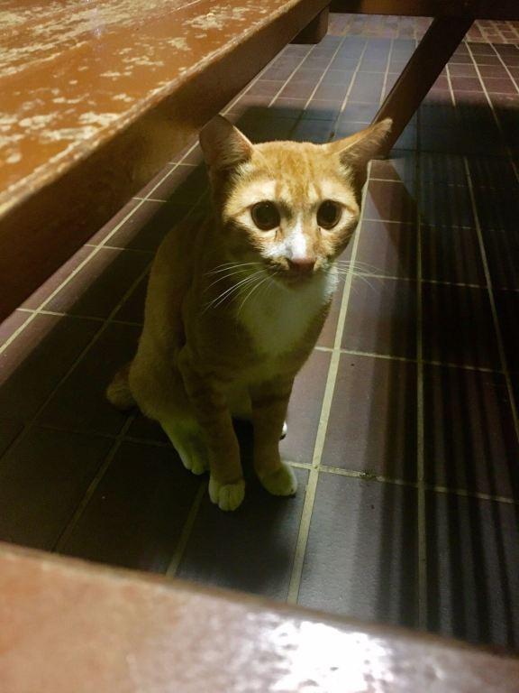 nus-cat-cafe-cat3
