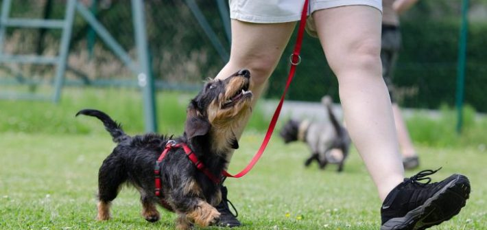 The Importance Of Dog Training