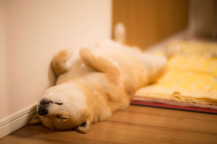 dog-relaxing