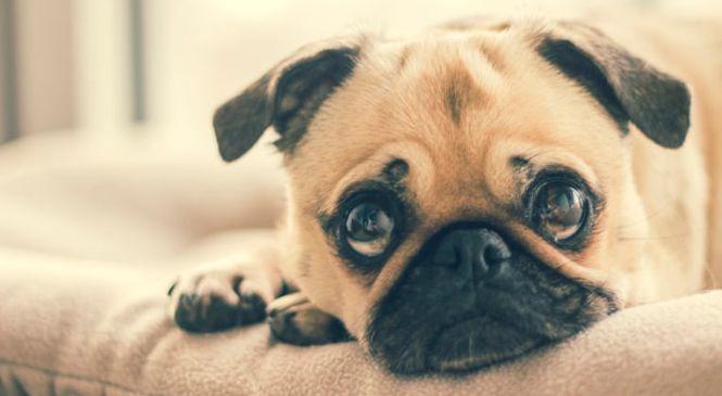 Köpek bakımı uzun ve zorlu bir süreçtir
