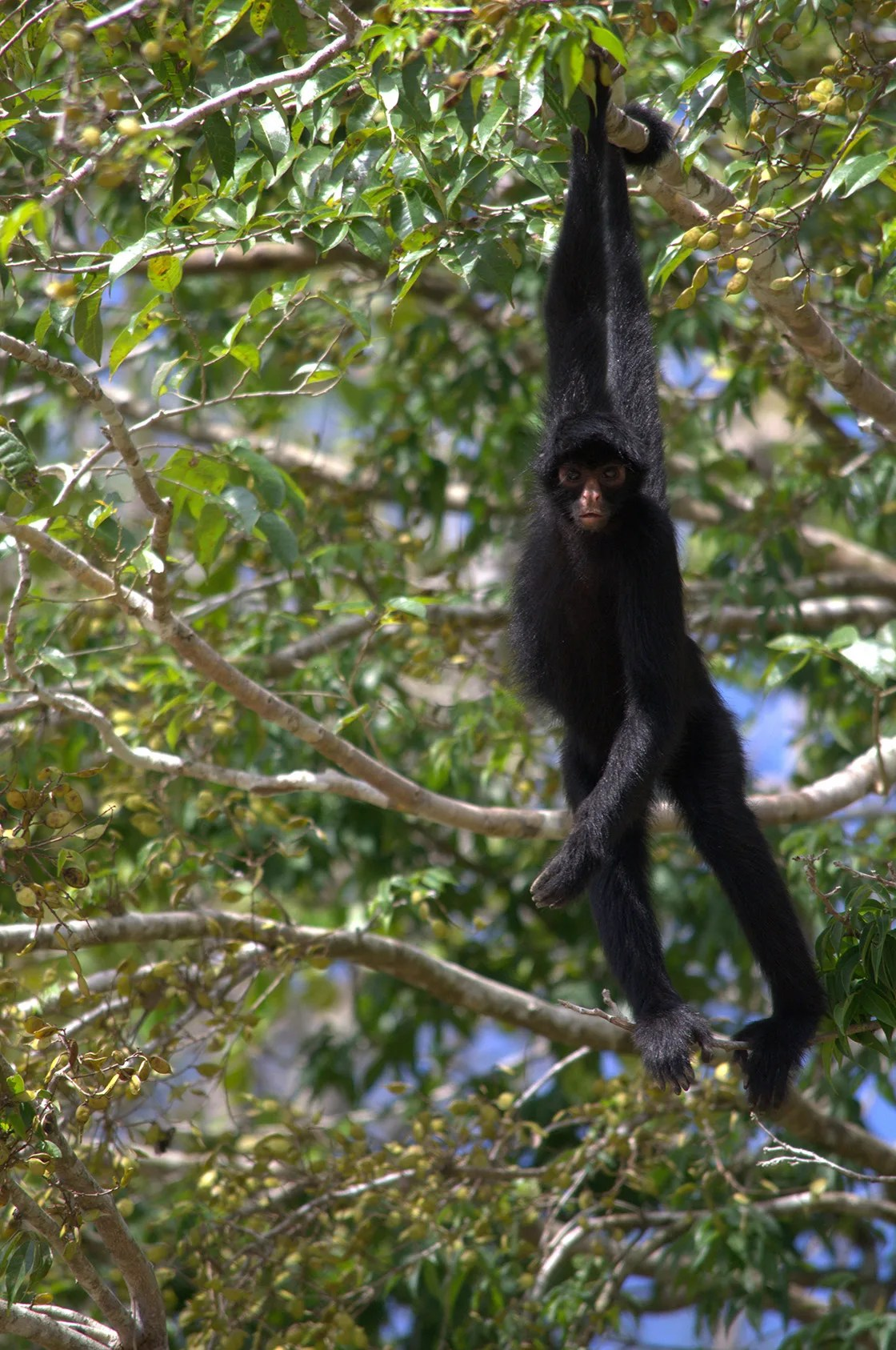 Scientists have discovered a new species of titi monkey in brazil, according to a recent paper published in scientific journal papéis. Top 6 Amazon Rainforest Monkeys To Spot Rainforest Cruises