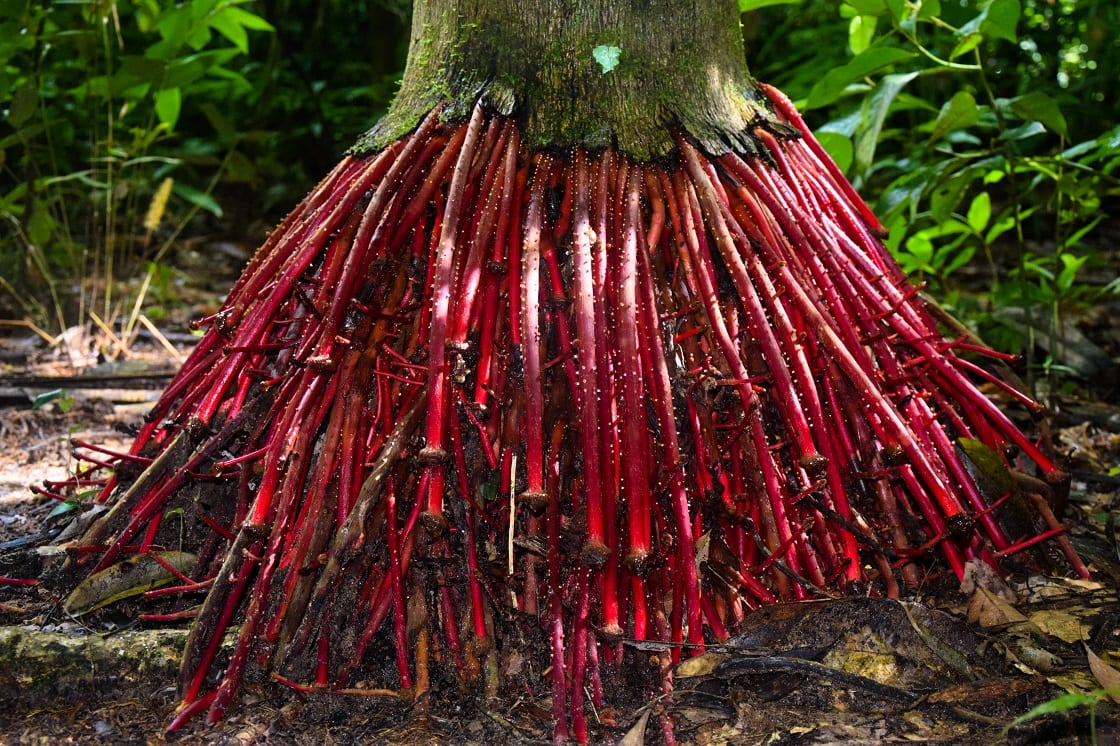 Thanks to the plants for a future database, the usda plants database, the burke museum herbarium database, and the books edible forest gardens, botany in a day, and food plants of interior first peoples for help with this list. Top 10 Medicinal Plants Of The Amazon Rainforest Cruises