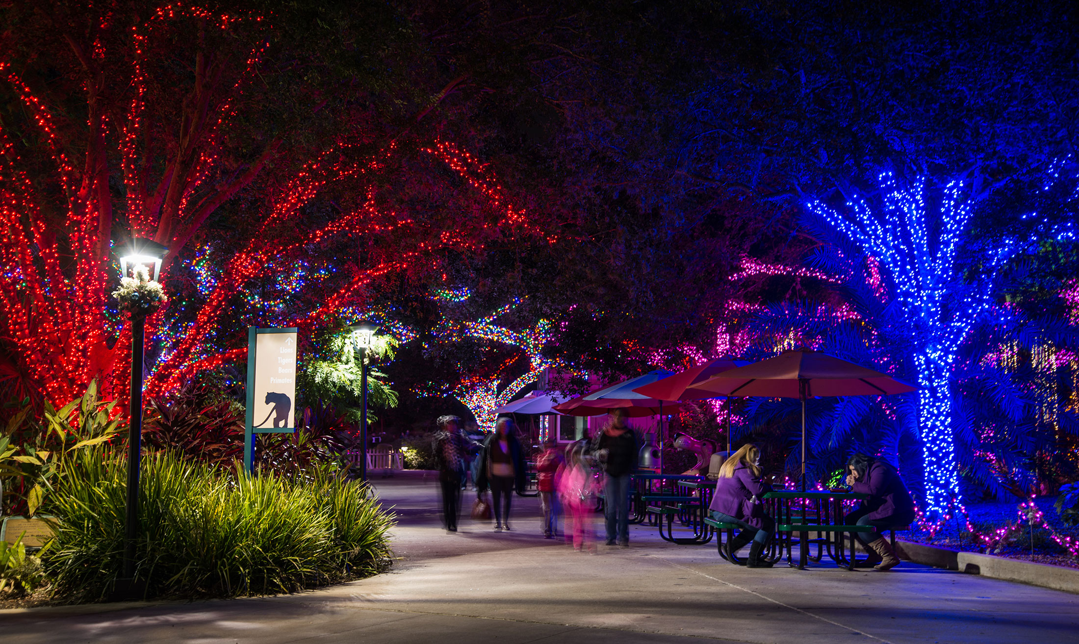 Houston Zoo Lights Christmas