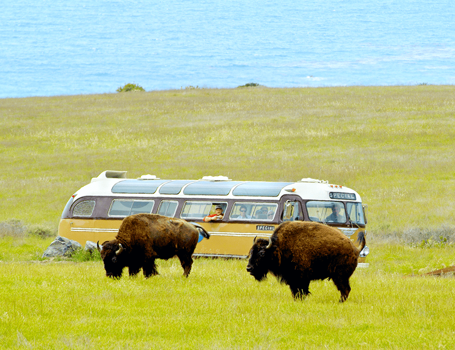 Image result for bison on a bus