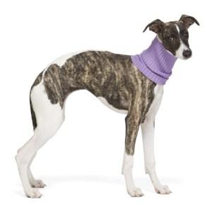 giu giu Purple Nonna Animal Collar