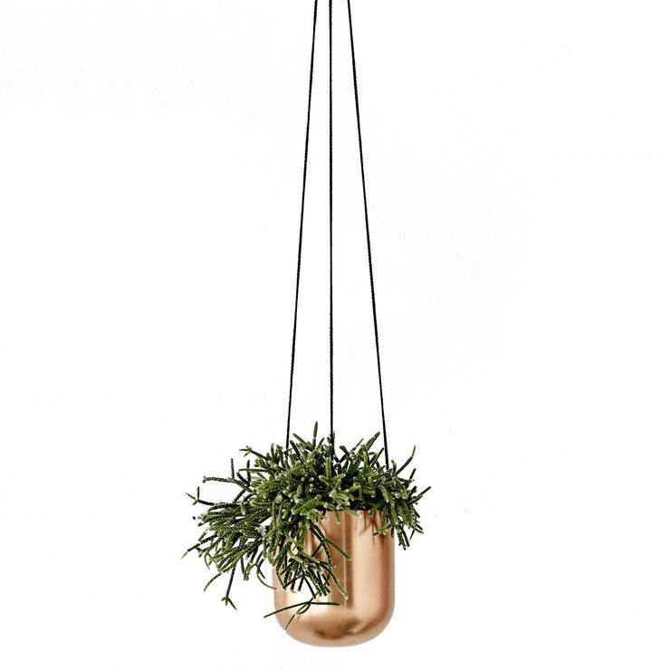 Hanging Plants Indoor