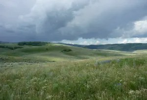Sage-grouse nesting habitat near Strawberry Reservoir