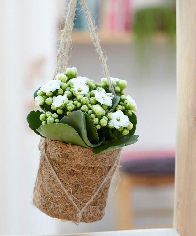 10 plantes suspendues top d co une plante pour mon bureau. Black Bedroom Furniture Sets. Home Design Ideas