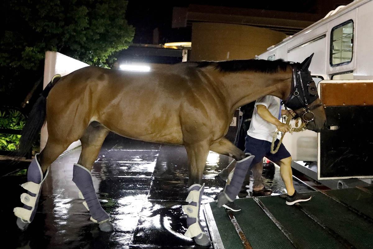 「藍天堡馬」出發前赴韓國參賽 – 賽馬新聞 – 香港賽馬會