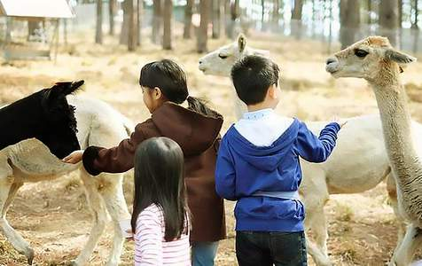 Tour ngày tham quan ZooDoo với tuỳ chọn tham quan Vườn ánh sáng Lumiere Đà Lạt