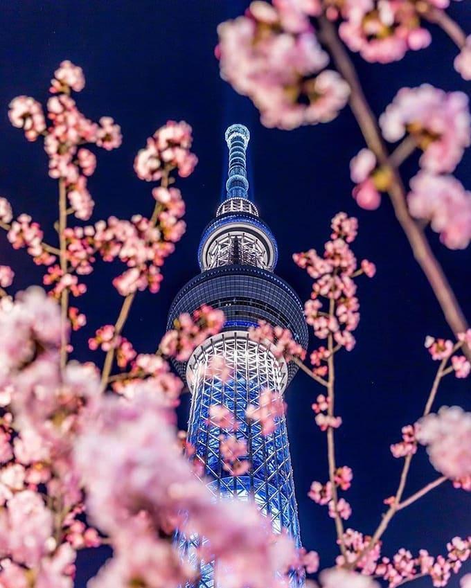 tokyo sky tree là một địa điểm ngắm hoa anh đào