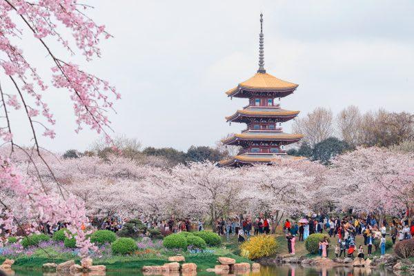 【2019追櫻攻略】意想不到的櫻花之地-中國篇 - Klook Travel Blog