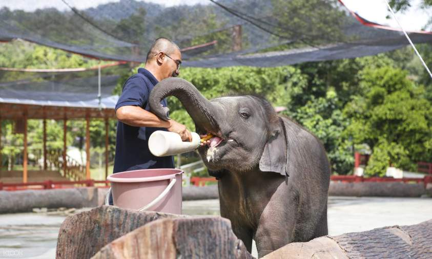 Kuala Gandah Elephant Sanctuary - Best Day Trips from Kuala Lumpur