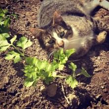 Alvy checking on the celery