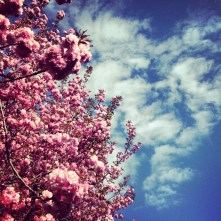Blossoms Stretching Skyward