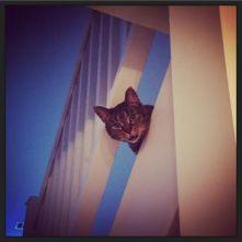 Dinah loves the loft