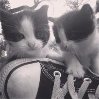 Kittens matching the shoes