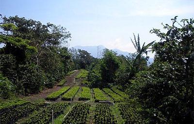Panama Boquete Floreal Coffee