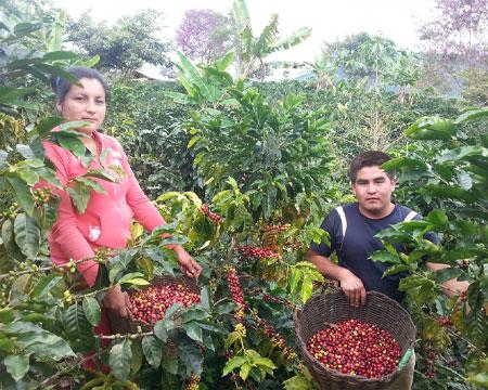 Peru Single Origin Coffee